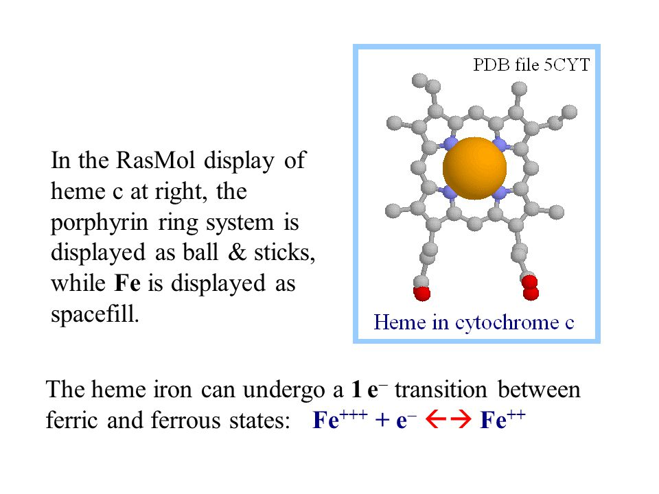 The heme iron can undergo a 1 e  transition between ferric and ferrous states: Fe +++ + e   Fe ++ In the RasMol display of heme c at right, the porphyrin ring system is displayed as ball & sticks, while Fe is displayed as spacefill.