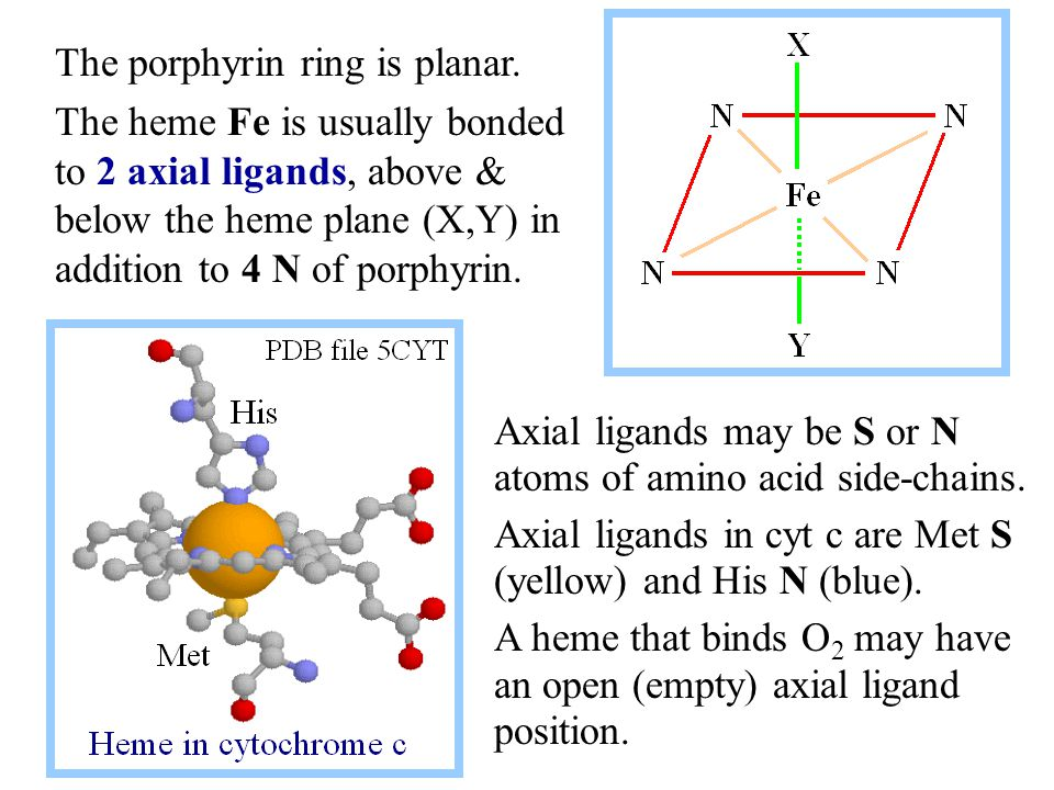 Axial ligands may be S or N atoms of amino acid side-chains.