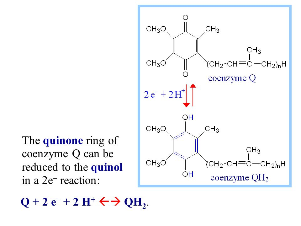 The quinone ring of coenzyme Q can be reduced to the quinol in a 2e  reaction: Q + 2 e  + 2 H +  QH 2.