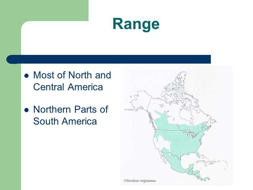 Range Most of North and Central America Northern Parts of South America