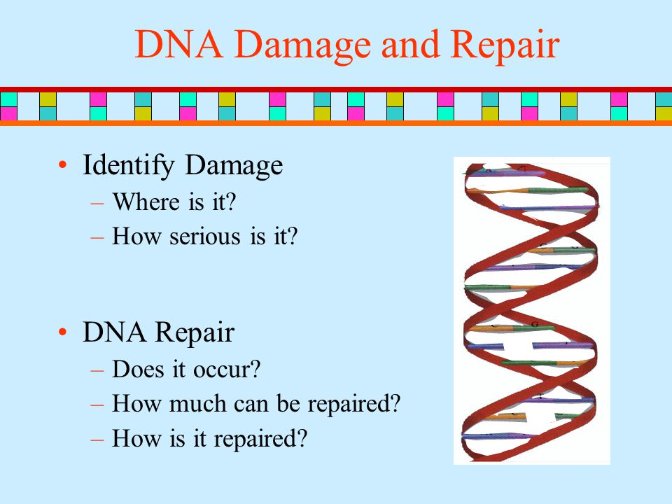 DNA Damage and Repair Identify Damage –Where is it.