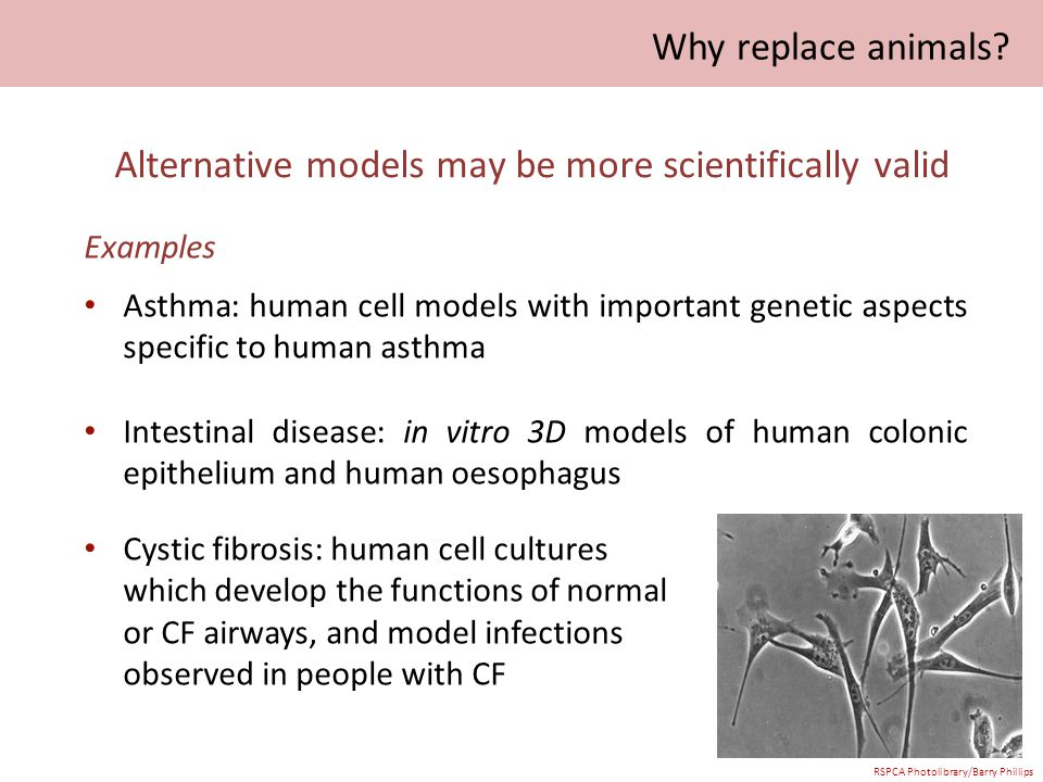 Alternative models may be more scientifically valid Examples Asthma: human cell models with important genetic aspects specific to human asthma Intestinal disease: in vitro 3D models of human colonic epithelium and human oesophagus Cystic fibrosis: human cell cultures which develop the functions of normal or CF airways, and model infections observed in people with CF Why replace animals.