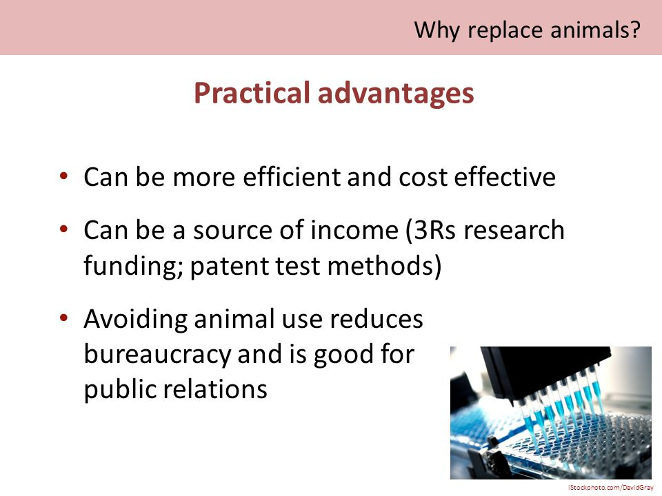 Practical advantages Can be more efficient and cost effective Can be a source of income (3Rs research funding; patent test methods) Avoiding animal use reduces bureaucracy and is good for public relations iStockphoto.com/DavidGray Why replace animals