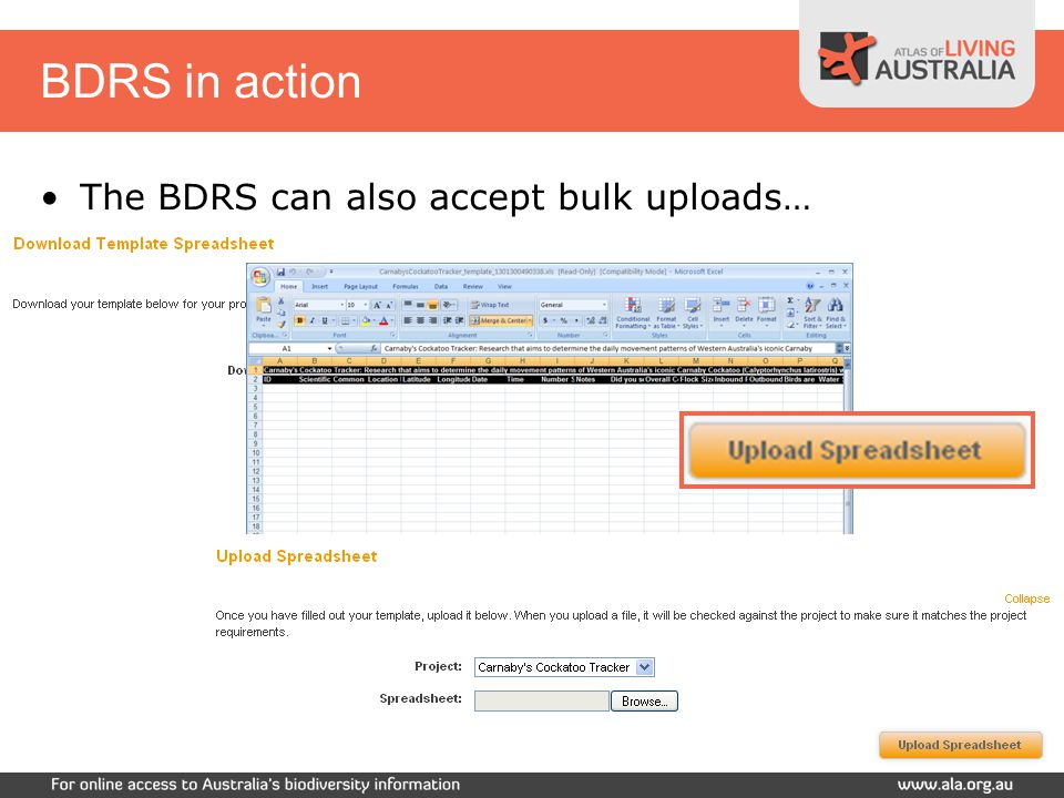 BDRS in action The BDRS can also accept bulk uploads…