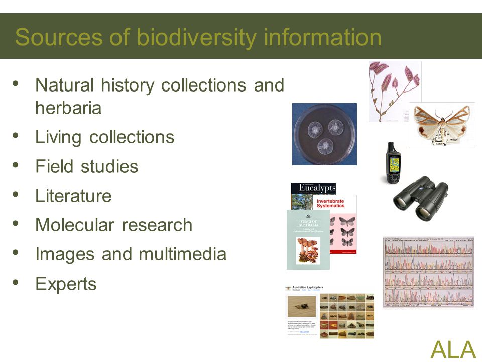 ALA Sources of biodiversity information Natural history collections and herbaria Living collections Field studies Literature Molecular research Images and multimedia Experts