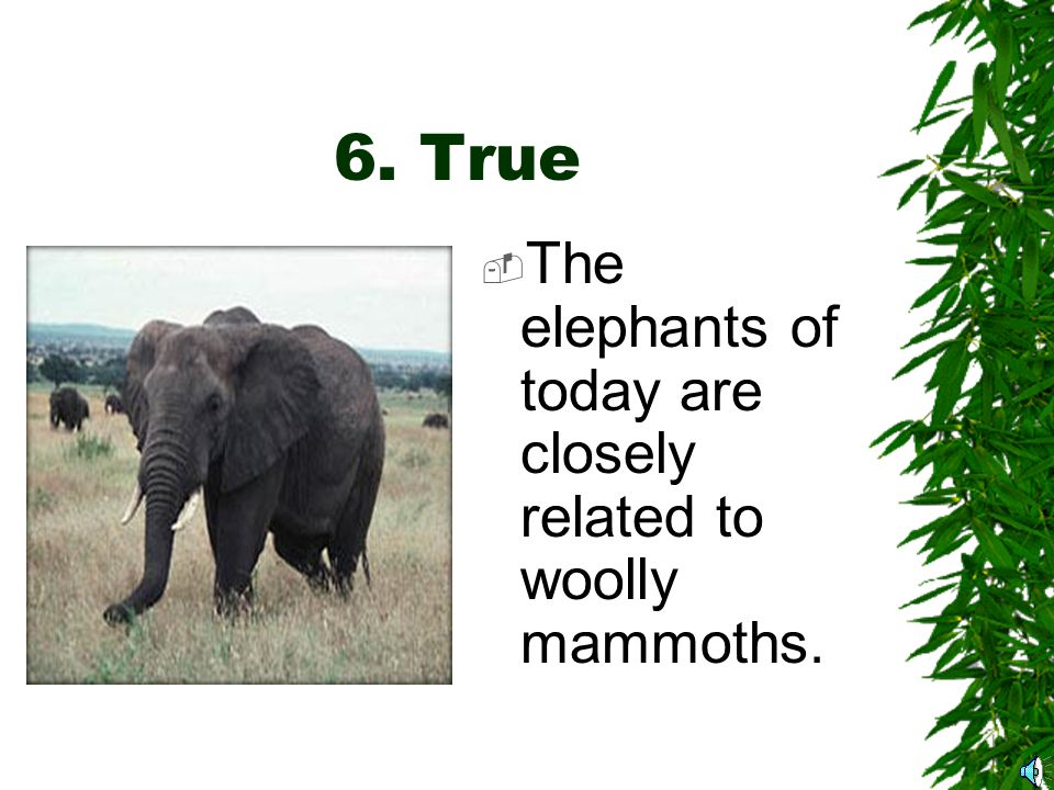 6. True or False  The African and Asian elephants are related to the woolly mammoth.