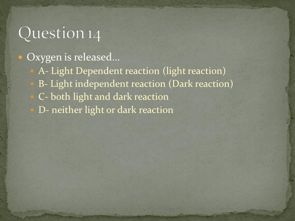 Oxygen is released… A- Light Dependent reaction (light reaction) B- Light independent reaction (Dark reaction) C- both light and dark reaction D- neither light or dark reaction
