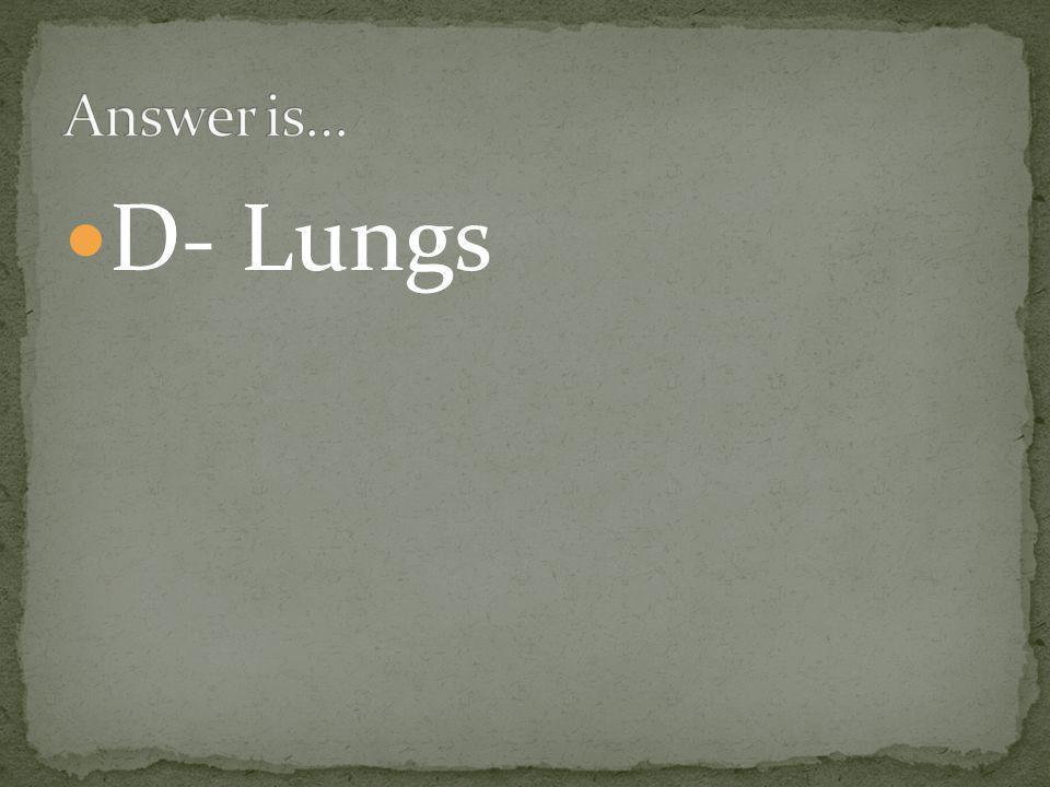 D- Lungs