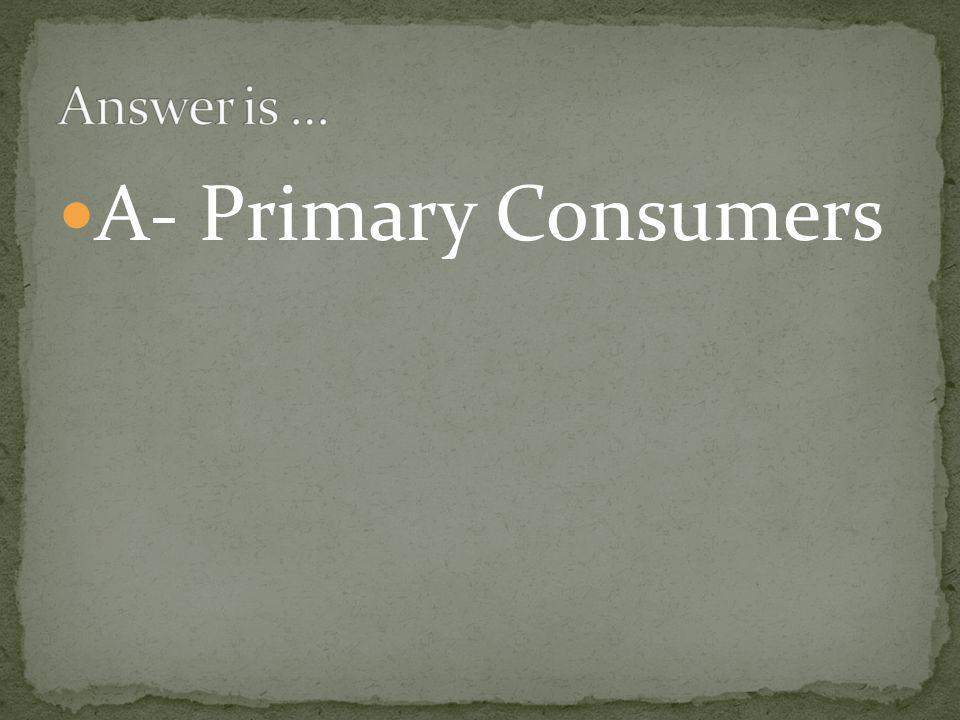 A- Primary Consumers