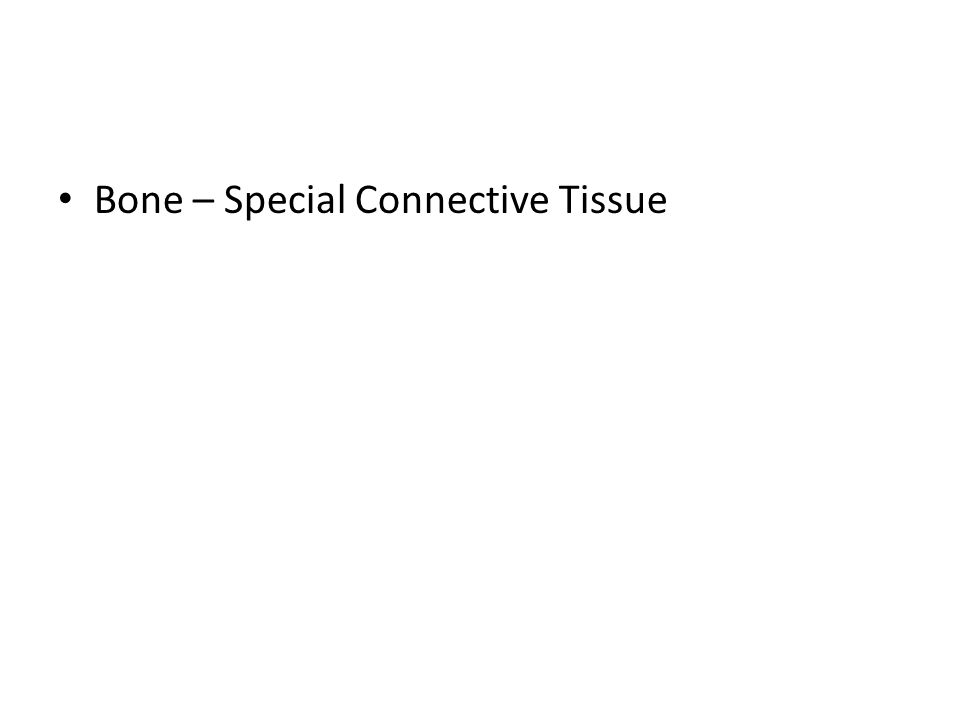 Bone – Special Connective Tissue