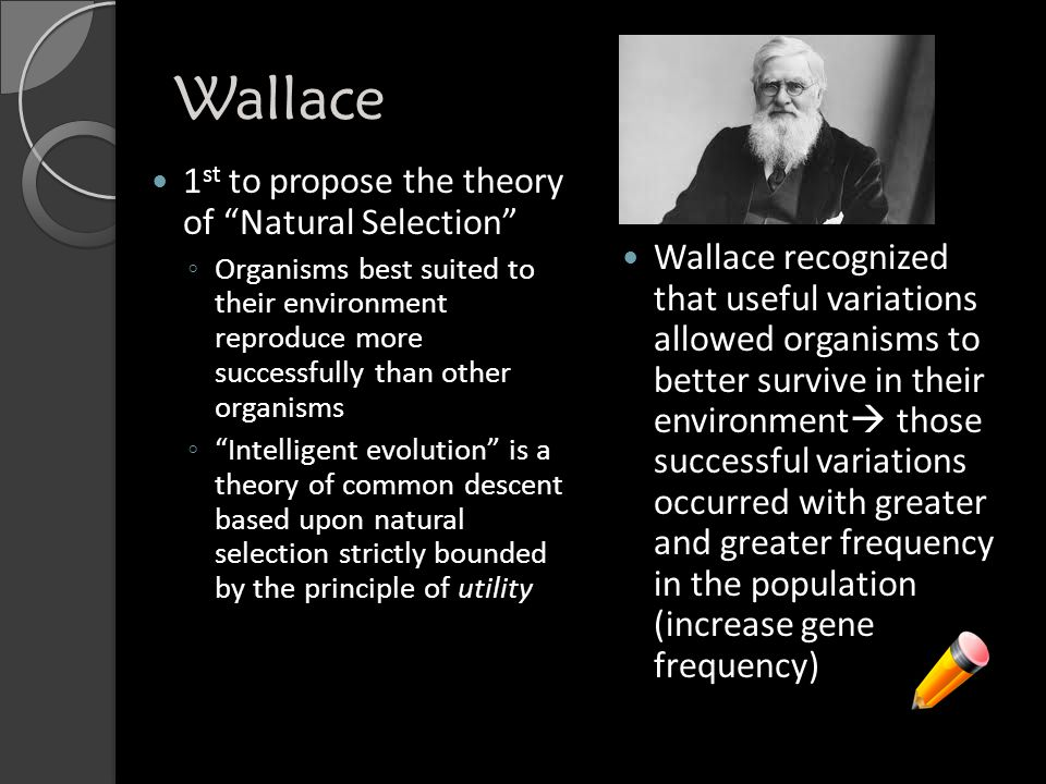 Wallace 1 st to propose the theory of Natural Selection ◦ Organisms best suited to their environment reproduce more successfully than other organisms ◦ Intelligent evolution is a theory of common descent based upon natural selection strictly bounded by the principle of utility Wallace recognized that useful variations allowed organisms to better survive in their environment  those successful variations occurred with greater and greater frequency in the population (increase gene frequency)