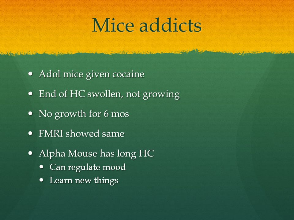 Mice addicts Adol mice given cocaine Adol mice given cocaine End of HC swollen, not growing End of HC swollen, not growing No growth for 6 mos No growth for 6 mos FMRI showed same FMRI showed same Alpha Mouse has long HC Alpha Mouse has long HC Can regulate mood Can regulate mood Learn new things Learn new things