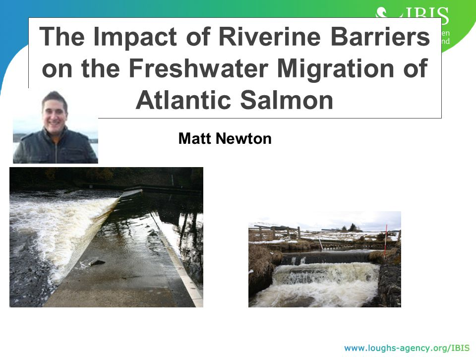 The Impact of Riverine Barriers on the Freshwater Migration of Atlantic Salmon Matt Newton