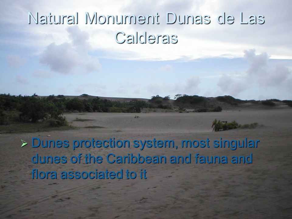 Natural Monument Dunas de Las Calderas  Dunes protection system, most singular dunes of the Caribbean and fauna and flora associated to it