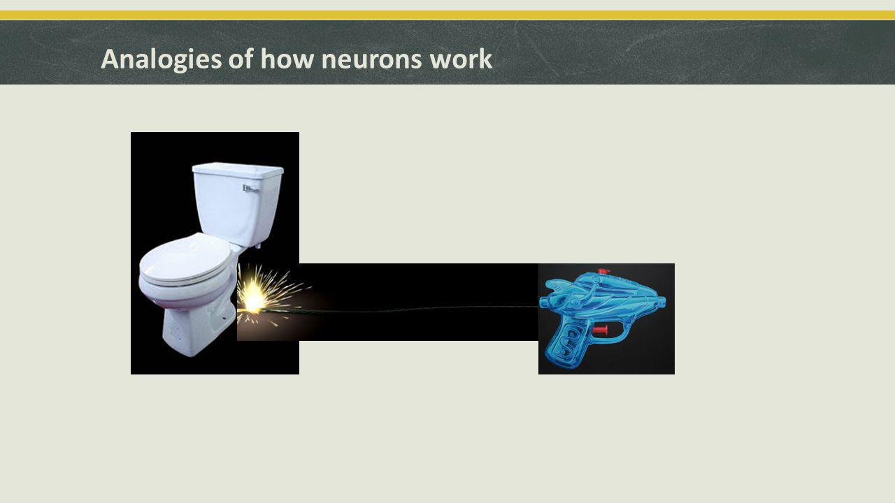 Analogies of how neurons work