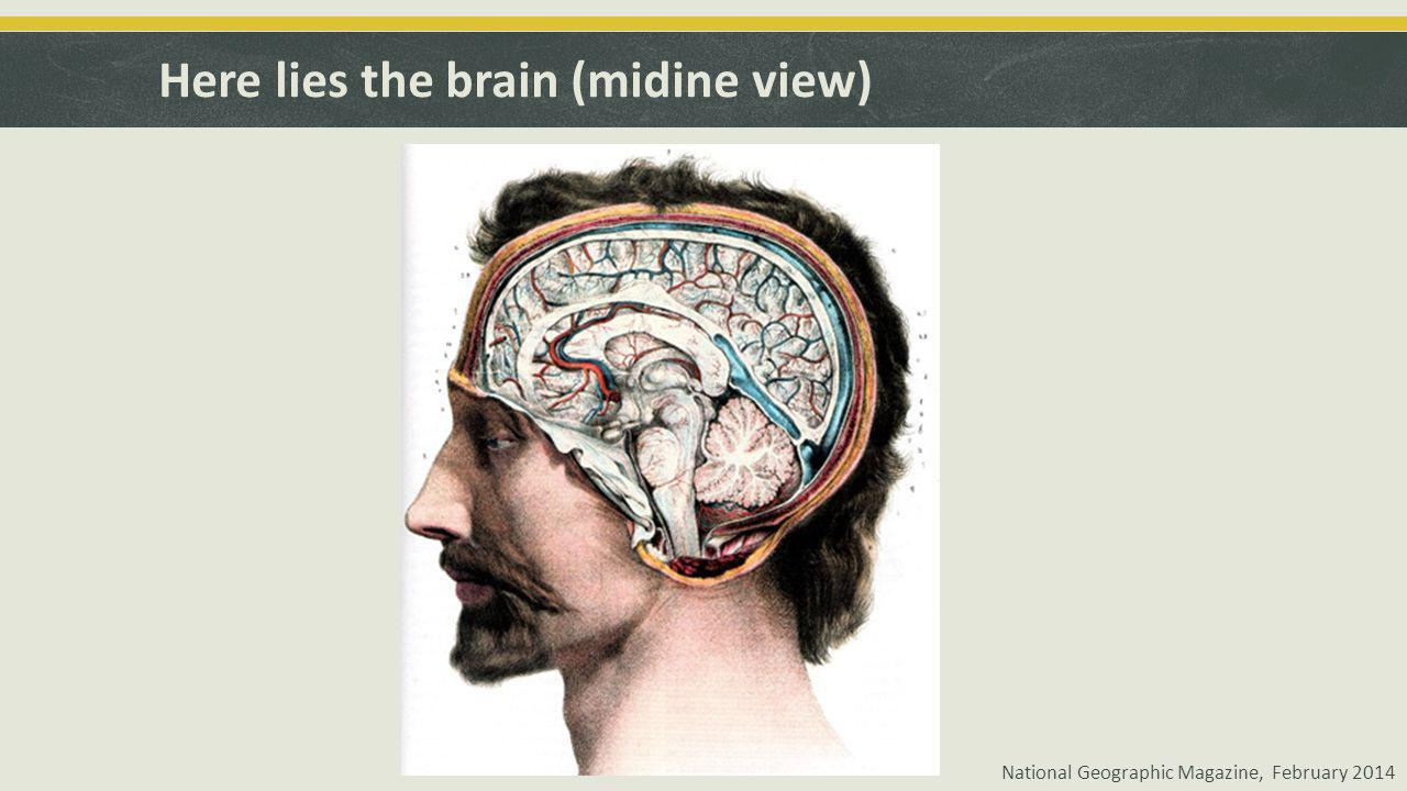 Here lies the brain (midine view) National Geographic Magazine, February 2014