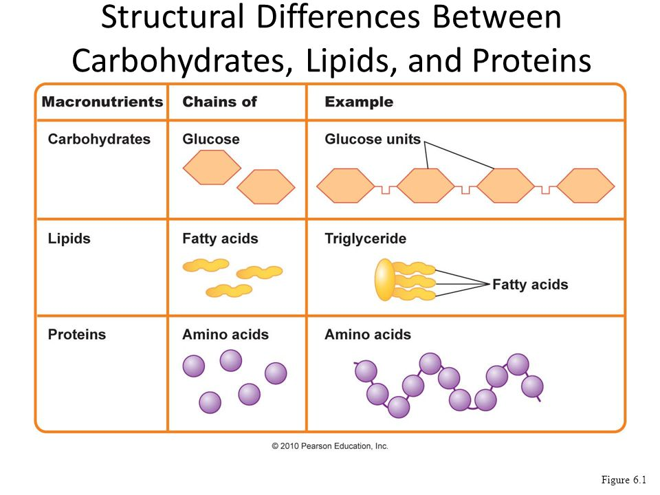 2009-2010 For enzymes… What matters SHAPE!