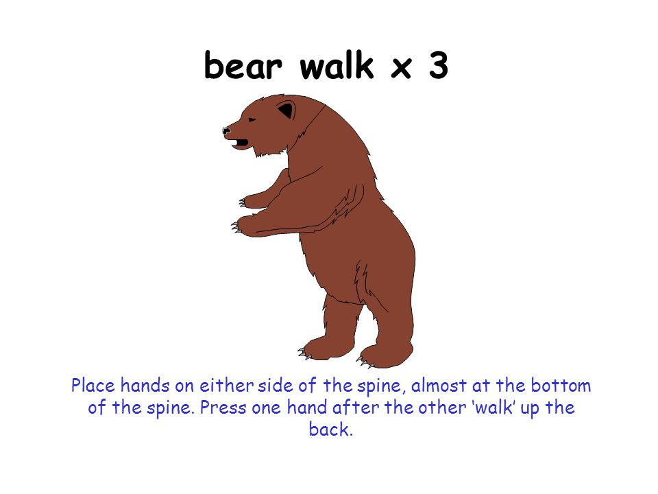 bear walk x 3 Place hands on either side of the spine, almost at the bottom of the spine.