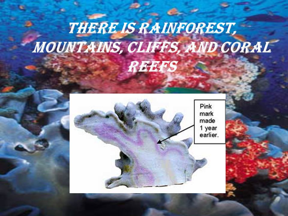 There is rainforest, mountains, cliffs, and coral reefs
