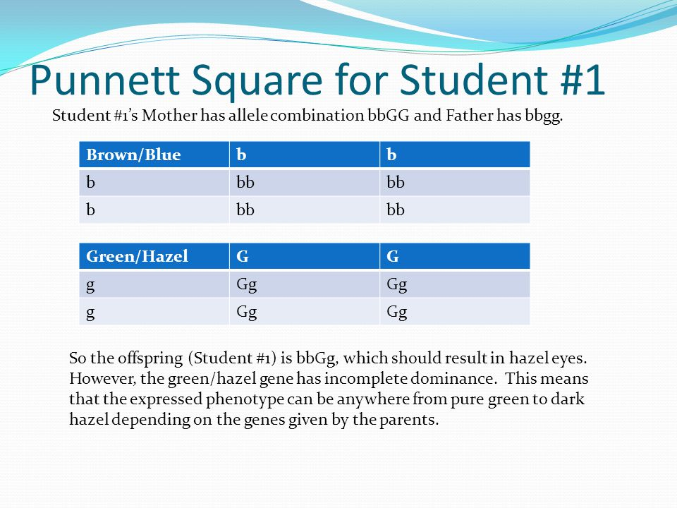 Punnett Square for Student #1 Student #1's Mother has allele combination bbGG and Father has bbgg.