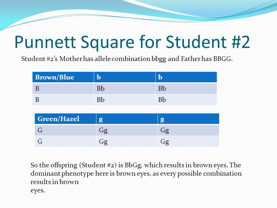 Punnett Square for Student #2 Student #2's Mother has allele combination bbgg and Father has BBGG.