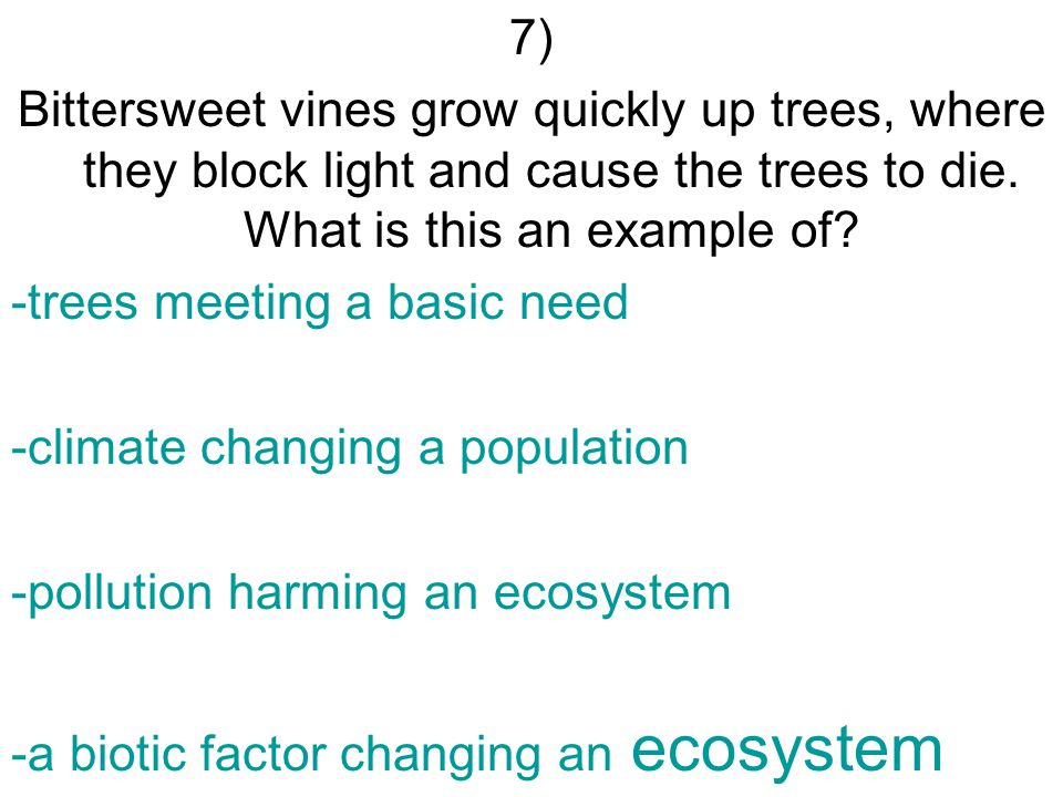 7) Bittersweet vines grow quickly up trees, where they block light and cause the trees to die.