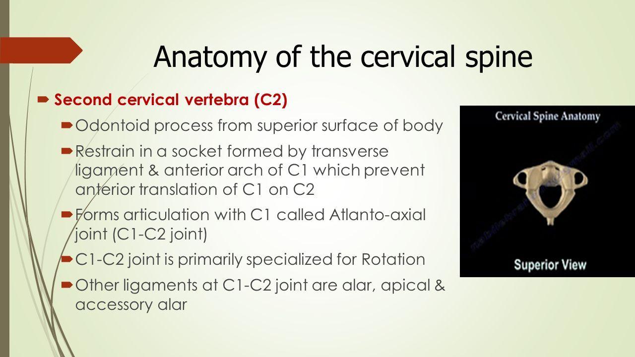 BIOMECHANICS OF CERVICAL SPINE DR. FATIMA ZEHRA (Physical Therapist ...