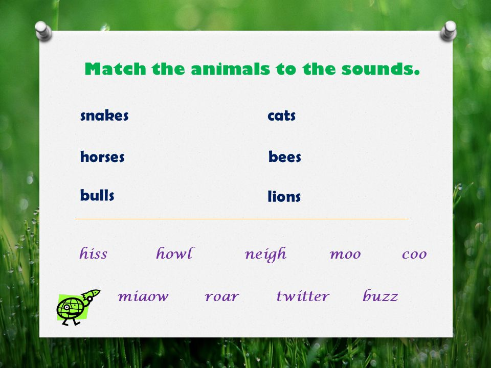 Match the animals to the sounds.