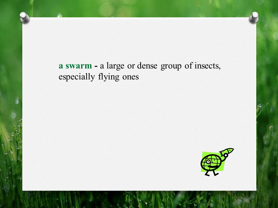 a swarm - a large or dense group of insects, especially flying ones