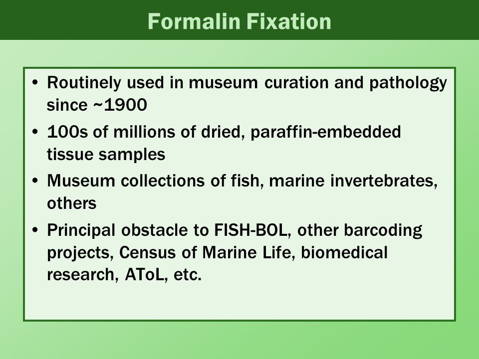 Formalin Fixation Routinely used in museum curation and pathology since ~1900 100s of millions of dried, paraffin-embedded tissue samples Museum collections of fish, marine invertebrates, others Principal obstacle to FISH-BOL, other barcoding projects, Census of Marine Life, biomedical research, AToL, etc.