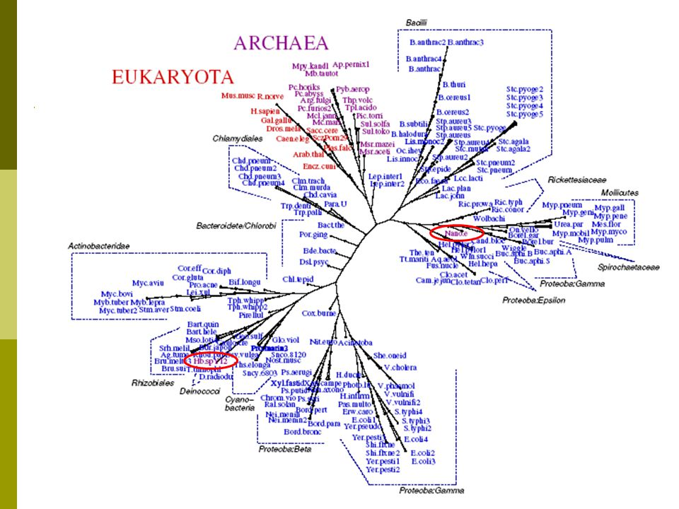  191 proteomes from NCBI Genome  11 Eukarya, 19 Archaea, 161 Bacteria  Compared to NCBI Taxonomy All Proteomes Dataset