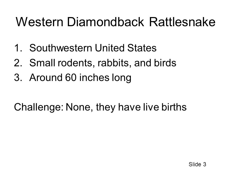 Western Diamondback Rattlesnake 1.Southwestern United States 2.Small rodents, rabbits, and birds 3.Around 60 inches long Challenge: None, they have live births Slide 3