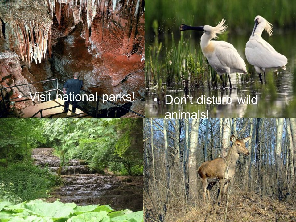 Visit national parks! Don't disturb wild animals!