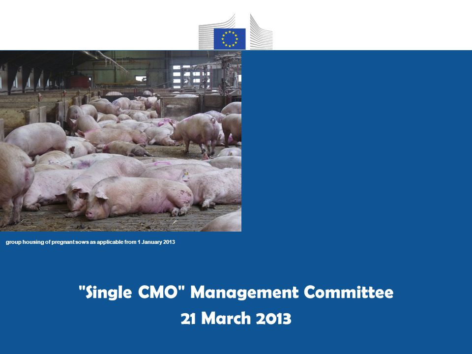 group housing of pregnant sows as applicable from 1 January 2013 Single CMO Management Committee 21 March 2013