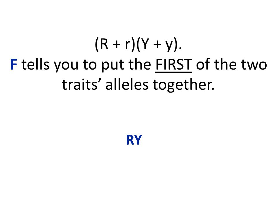 (R + r)(Y + y). F tells you to put the FIRST of the two traits' alleles together. RY