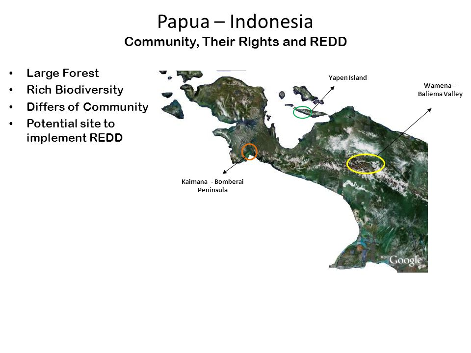 Papua – Indonesia Community, Their Rights and REDD Large Forest Rich Biodiversity Differs of Community Potential site to implement REDD Wamena – Baliema Valley Yapen Island Kaimana - Bomberai Peninsula