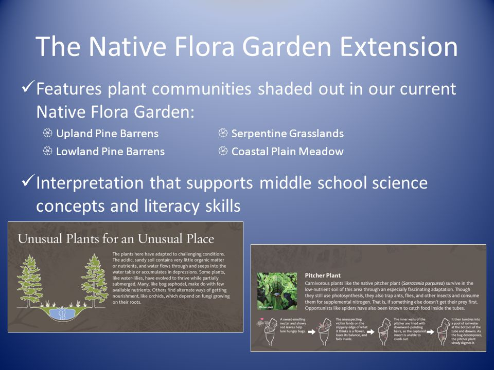 The Native Flora Garden Extension Features plant communities shaded out in our current Native Flora Garden:  Upland Pine Barrens  Serpentine Grasslands  Lowland Pine Barrens  Coastal Plain Meadow Interpretation that supports middle school science concepts and literacy skills