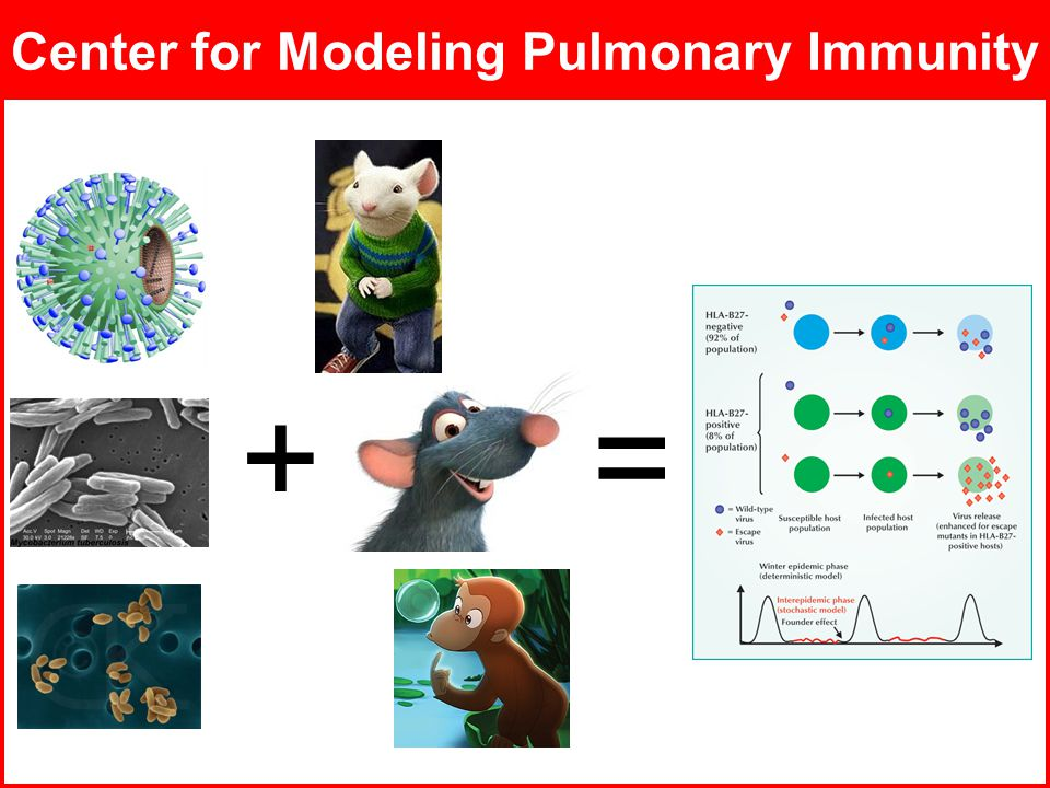 ADMT Lab / University of PittsburghJuly 8, 2008 Center for Modeling Pulmonary Immunity +=