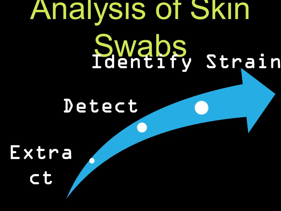 Analysis of Skin Swabs Bd DNA from the nested PCR assay was put into a plasmid and cloned into bacteria in preparation for sequencing.