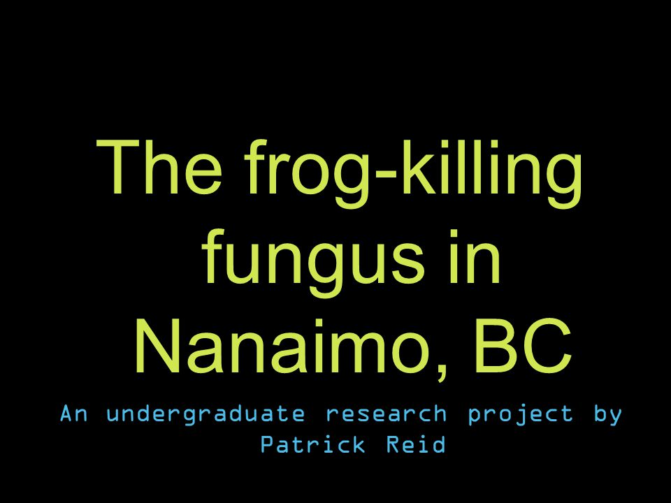 The frog-killing fungus in Nanaimo, BC An undergraduate research project by Patrick Reid