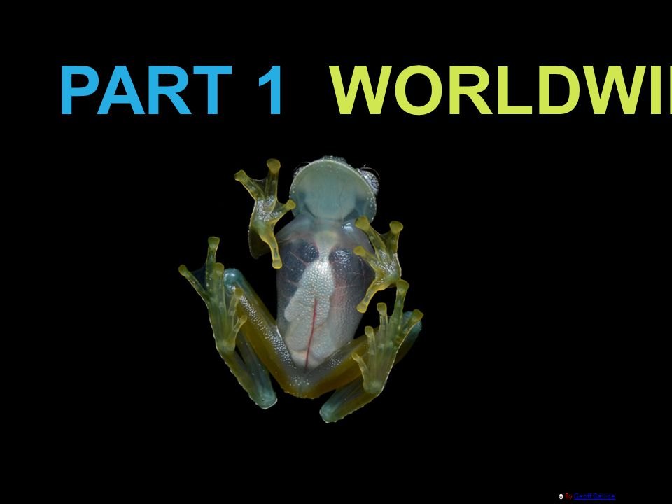 PART 1 WORLDWIDE By Geoff GalliceGeoff Gallice