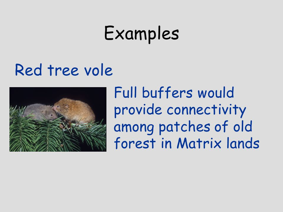Examples Red tree vole Full buffers would provide connectivity among patches of old forest in Matrix lands