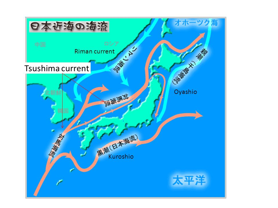Tsushima current Kuroshio Oyashio Riman current