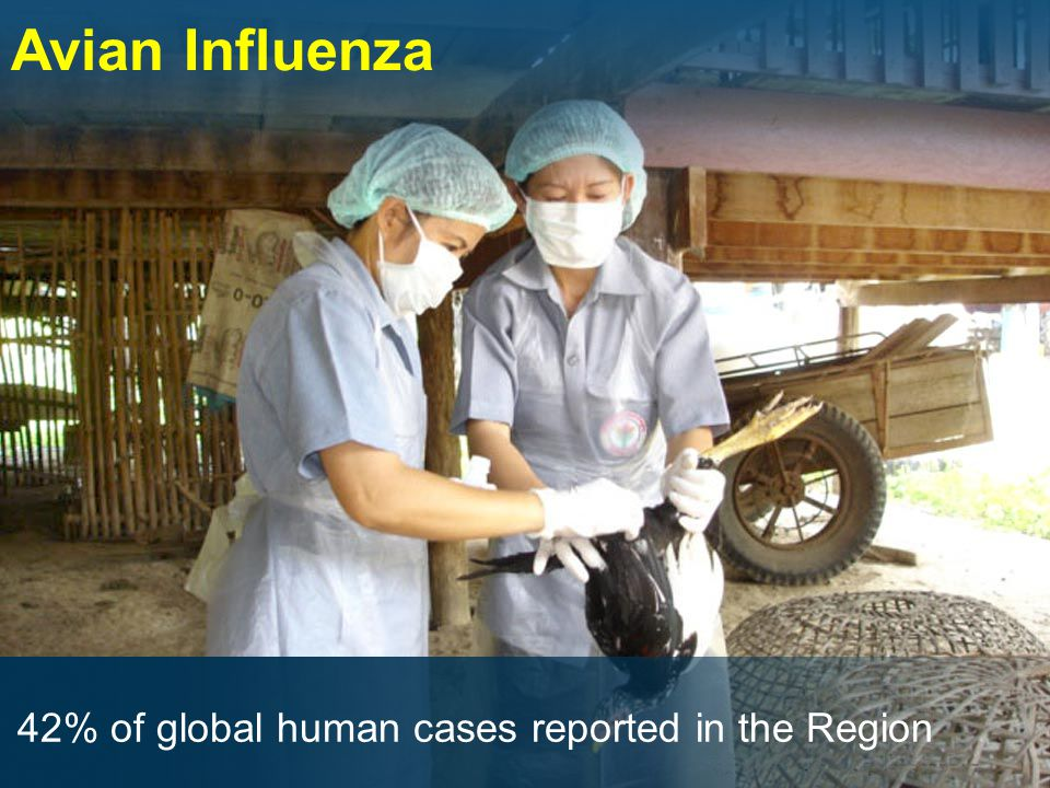 Avian Influenza 42% of global human cases reported in the Region