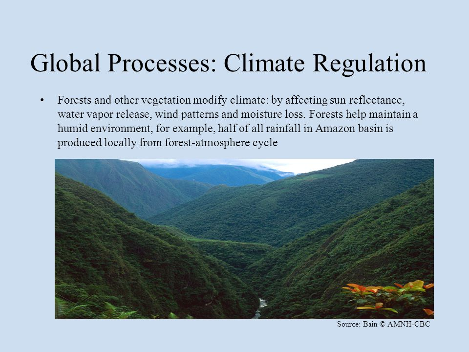 Global Processes: Climate Regulation Forests and other vegetation modify climate: by affecting sun reflectance, water vapor release, wind patterns and moisture loss.