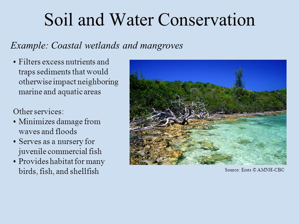 Filters excess nutrients and traps sediments that would otherwise impact neighboring marine and aquatic areas Other services: Minimizes damage from waves and floods Serves as a nursery for juvenile commercial fish Provides habitat for many birds, fish, and shellfish Source: Ersts © AMNH-CBC Soil and Water Conservation Example: Coastal wetlands and mangroves