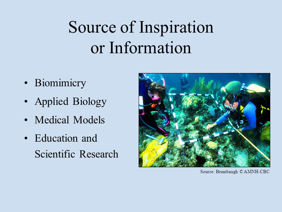 Source of Inspiration or Information Biomimicry Applied Biology Medical Models Education and Scientific Research Source: Brumbaugh © AMNH-CBC