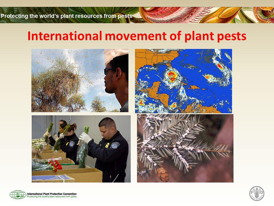 International movement of plant pests