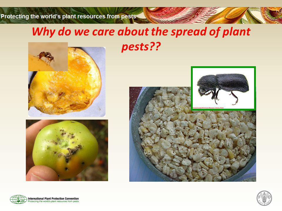 Why do we care about the spread of plant pests