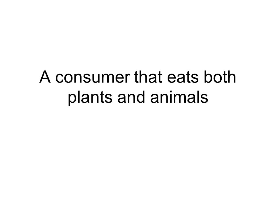 A consumer that eats both plants and animals